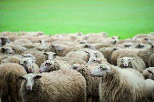 Herder glossy-1-4 [Desktop Resolutie]