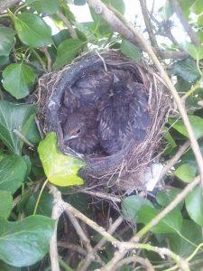 vogels achtertuin
