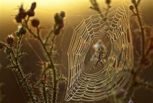 spinnenweb 5